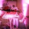 Vase martini et orchidées