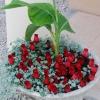 Pot de fleur extérieur customisé