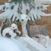 Vitrine de Noël en Laponie