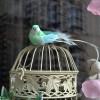 Printemps, cage à oiseau