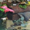Jungle, valise d'explorateur