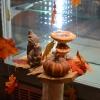 Vitrines d'automne